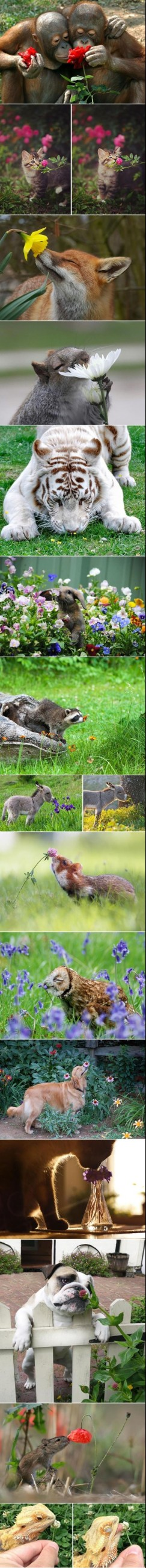 Animals taking time to smell the flowers